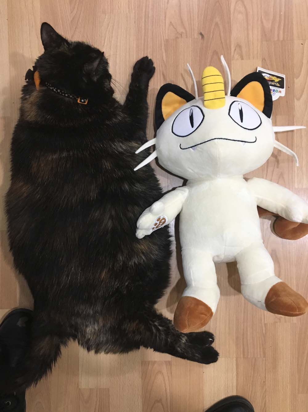 My IRL fat cat used for size reference